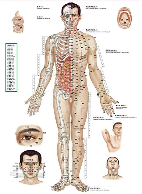 meridiani e pranoterapia mcc